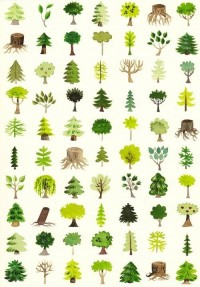 "° T R E E S ° / DENDROLOGY [noun] the science and study of wooded plants (trees, shrubs, and lianas). Etymology: Ancient Greek: ???????, dendron, ""tree""; and Ancient Greek: -?????, -logia, science of or study of."