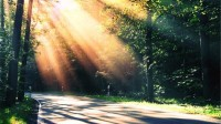 trees,DeviantART trees deviantart sunlight roads morning 2560x1440 wallpaper – DeviantART Wallpaper – Free Desktop Wallpaper