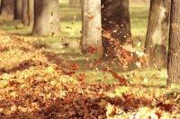trees,leaves trees leaves winds fallen leaves 3456x2304 wallpaper – trees,leaves trees leaves winds fallen leaves 3456x2304 wallpaper – Leaves Wallpaper – Desktop Wallpaper
