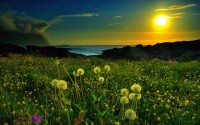 nature,fields nature fields meadow spring 2560x1600 wallpaper – Fields Wallpapers – Free Desktop Wallpapers