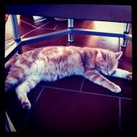 cat.jpg (400×400)