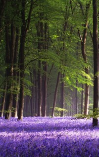 Photo love / lavender