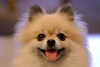 dogs,puppies dogs puppies 3008x2000 wallpaper – dogs,puppies dogs puppies 3008x2000 wallpaper – Puppies Wallpaper – Desktop Wallpaper