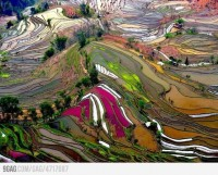 Photography / Terraced rice field