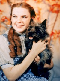 Dorothy The Wizard Of Oz Pictures and Images
