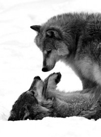 photography / wolf & wolf