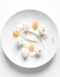 Nicolas Buisson Photography - Food - 24. Aloé véra poché et rafraîchi au pamplemousse rose, faiselle poivrée et jus à l'huile d'olive