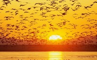 Free Download HD Flying Birds Sunrise Facebook Timeline Cover - Download FREE Widescreen HD Flying Birds Sunrise Facebook Timeline Cover