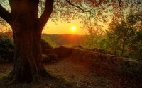 nature,sunset sunset nature trees 2560x1600 wallpaper – Sunsets Wallpapers – Free Desktop Wallpapers