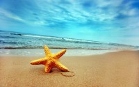 ocean,beach ocean beach sand starfish seea 1920x1200 wallpaper – Beaches Wallpapers – Free Desktop Wallpapers