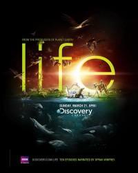 Life — Ars Thanea