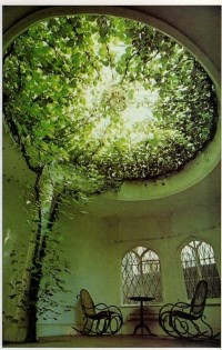 Design / trees-trees-trees
