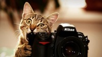 cats,bite cats bite funny cameras nikon kittens photo camera biting 1920x1080 wallpaper – cats,bite cats bite funny cameras nikon kittens photo camera biting 1920x1080 wallpaper – Cats Wallpaper – Desktop Wallpaper
