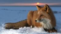 snow,Sun snow sun foxes 1920x1080 wallpaper – snow,Sun snow sun foxes 1920x1080 wallpaper – Sun Wallpaper – Desktop Wallpaper