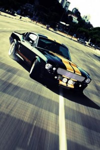 Photography / Mustang