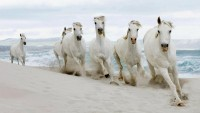 nature,beach nature beach animals horses 1920x1080 wallpaper – nature,beach nature beach animals horses 1920x1080 wallpaper – Horses Wallpaper – Desktop Wallpaper