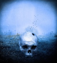 Skull by Crille | Shadowness