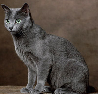Resultat av Googles bildsökning efter http://www.petfinder.com/images/breeds/cat/4000.jpg