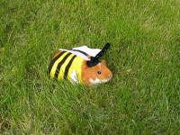 Sweety Guinea Pigs Gallery Guinea-Pig05 –