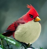 Geek Stuff / Real Angry Birds.