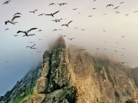 Nature Studies by Michael McCarthy: If your wish is for the wild, St Kilda will fulfil it - Nature Studies - Nature - The Independent