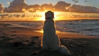 clouds,sunsets sunsets clouds landscapes beach sea animals dogs golden pets golden retriever 1920x1080 wallpaper – clouds,sunsets sunsets clouds landscapes beach sea animals dogs golden pets golden retriever 1920x1080 wallpaper – Clouds Wallpaper – Desktop Wallpaper