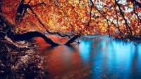 nature,landscapes landscapes nature trees autumn lakes tree trunk red leaf 1920x1080 wallpaper – nature,landscapes landscapes nature trees autumn lakes tree trunk red leaf 1920x1080 wallpaper – Lakes Wallpaper – Desktop Wallpaper