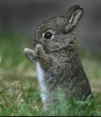Cute Baby Rabbit Gallery Baby-Rabbit01 –