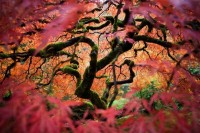 Merit (Outdoor Scenes) - Winners of the 2012 National Geographic Traveler Photo Contest - MSN ca