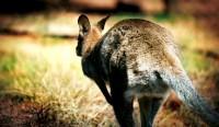 Animal Photography by Dani Garcia Sarabia