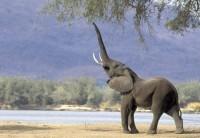 Google Afbeeldingen resultaat voor http://www.0297-online.nl/kaarten/safaridieren/0297safari23.jpg