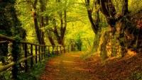 trees,autumn trees autumn forest path 1920x1080 wallpaper – trees,autumn trees autumn forest path 1920x1080 wallpaper – Forests Wallpaper – Desktop Wallpaper