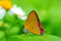 butterfly,insects butterfly insects 3184x2120 wallpaper – Butterflies Wallpapers – Free Desktop Wallpapers