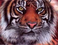 Tiger - Bic Ballpoint Pen by =VianaArts
