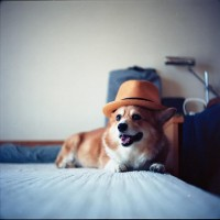 hat on head | Flickr - Photo Sharing!