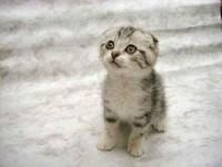 Google Afbeeldingen resultaat voor http://www.pictures-of-kittens-and-cats.com/images/cute-kitten-pictures-002.jpg