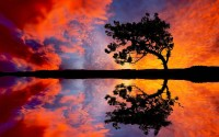 Trees,Landscapes landscapes trees reflections 2560x1600 wallpaper – Trees,Landscapes landscapes trees reflections 2560x1600 wallpaper – Trees Wallpaper – Desktop Wallpaper
