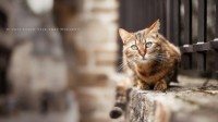 cats animals yellow eyes blurred 1920x1080 wallpaper High Quality Wallpapers,High Definition Wallpapers