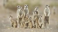 desert,Namibia desert namibia meerkat africa directions 1920x1080 wallpaper – desert,Namibia desert namibia meerkat africa directions 1920x1080 wallpaper – Desert Wallpaper – Desktop Wallpaper