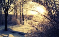 snow,Sun snow sun trees shadows winter landscapes 2560x1600 wallpaper – Trees Wallpapers – Free Desktop Wallpapers
