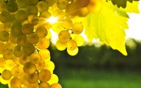 nature,Sun nature sun fruits grapes sunbeams 2560x1600 wallpaper – nature,Sun nature sun fruits grapes sunbeams 2560x1600 wallpaper – Sun Wallpaper – Desktop Wallpaper