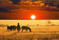 25 Most Beautiful Animals Photography on StumbleUpon | Beautiful Animals