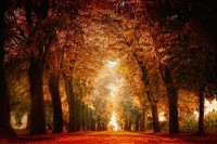 A Moment in Time / fall walkway, le sigh