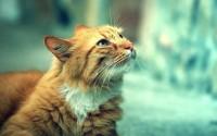 animals,cats cats animals 2560x1600 wallpaper – animals,cats cats animals 2560x1600 wallpaper – Animal Wallpaper – Desktop Wallpaper