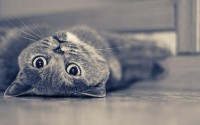 animals,cats cats animals monochrome 2560x1600 wallpaper – animals,cats cats animals monochrome 2560x1600 wallpaper – Monochrome Wallpaper – Desktop Wallpaper