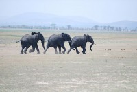 All sizes | Elephants on the run | Flickr - Photo Sharing!