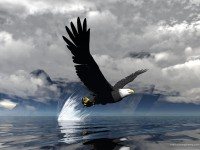 birds,fish birds fish eagles 1600x1200 wallpaper – birds,fish birds fish eagles 1600x1200 wallpaper – Fish Wallpaper – Desktop Wallpaper