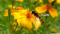 flowers,insects flowers insects 2560x1440 wallpaper – flowers,insects flowers insects 2560x1440 wallpaper – Insects Wallpaper – Desktop Wallpaper
