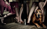 animals,legs legs animals dogs tables high heels 1680x1050 wallpaper – animals,legs legs animals dogs tables high heels 1680x1050 wallpaper – Legs Wallpaper – Desktop Wallpaper