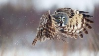 birds,owls birds owls 1600x909 wallpaper – birds,owls birds owls 1600x909 wallpaper – Birds Wallpaper – Desktop Wallpaper